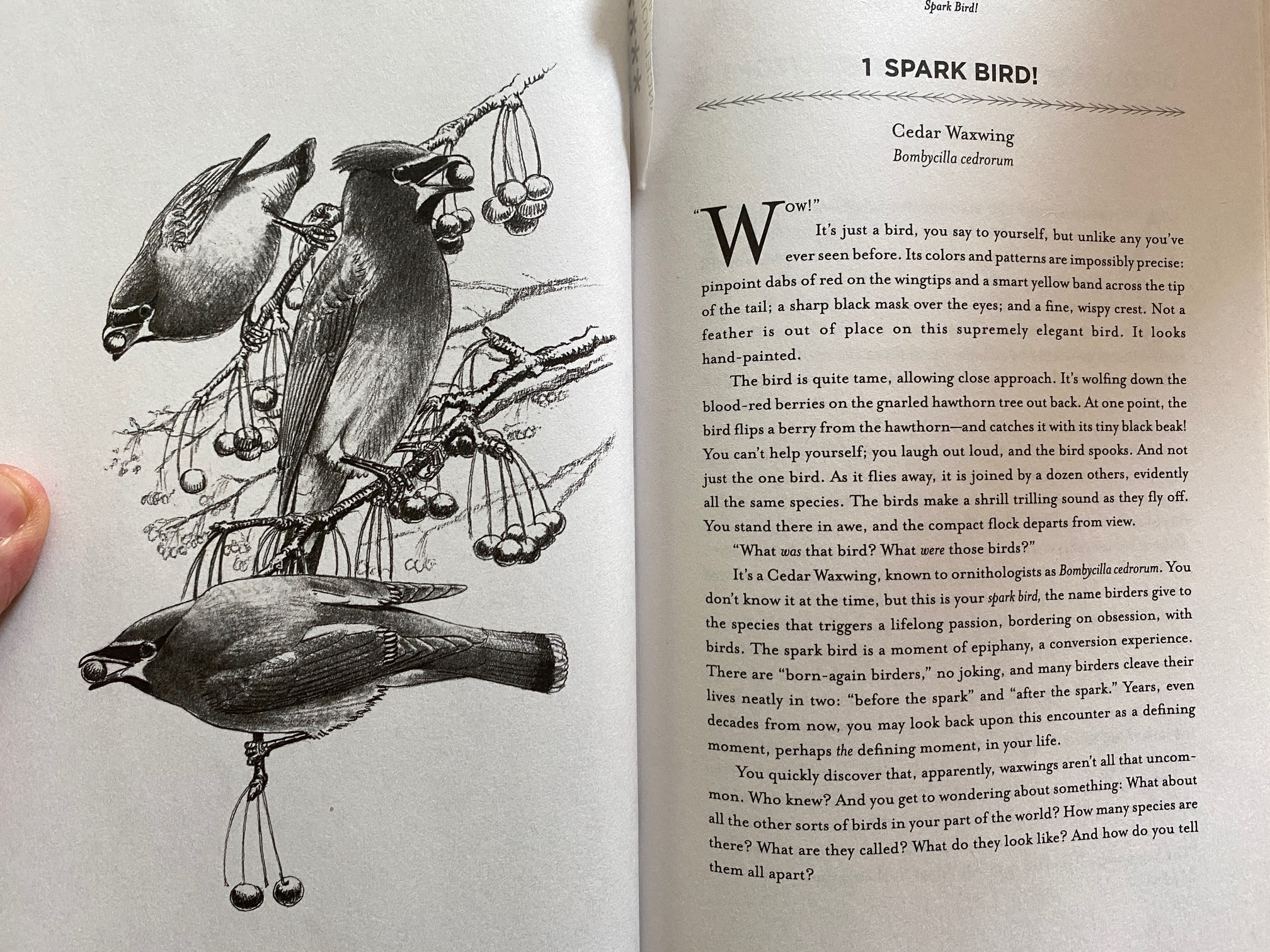 spread from How to Know the Birds